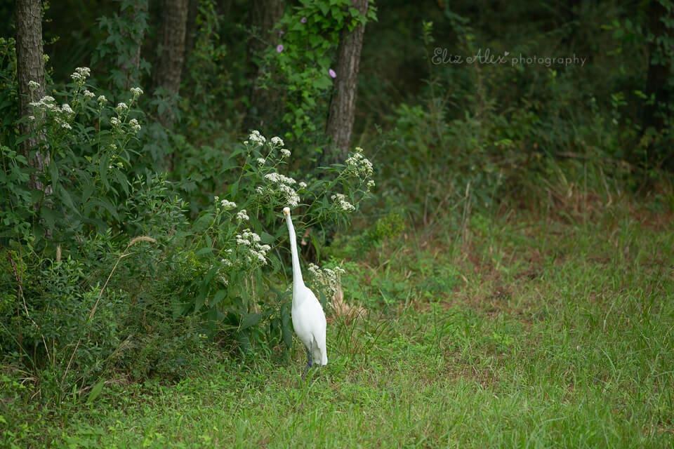 bird of the woodlands, texas